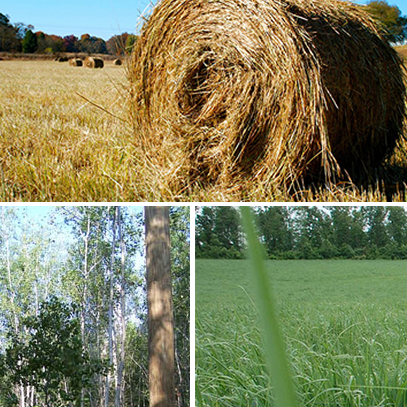 Bioenergy crops montage view